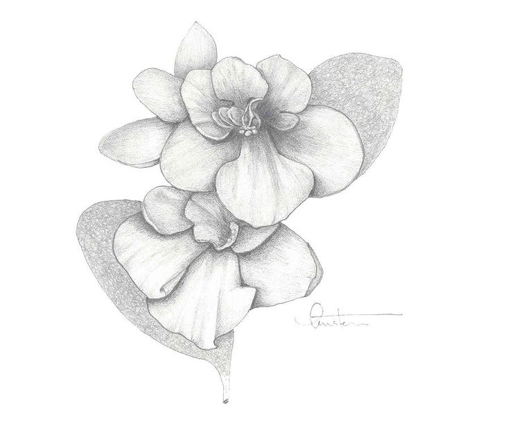 25 Best Violet Drawings Images On Pinterest Violets Ideas And Designs