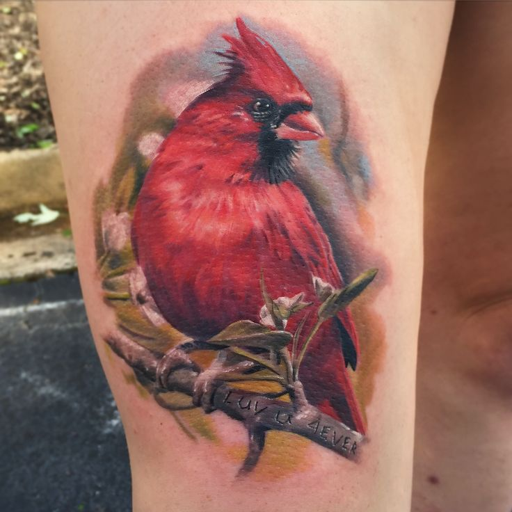 Cardinal Tattoo Done At Ink Dagger Tattoo Works Ideas And Designs