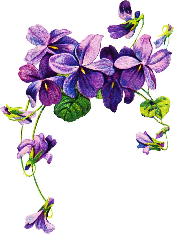 Best 25 Violet Flower Tattoos Ideas On Pinterest Violet Ideas And Designs