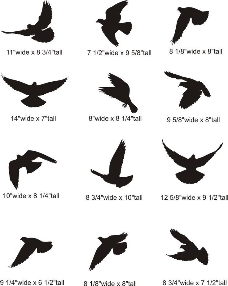 Tattoo Flying Dove Silhouette Pictures Bird Tattoos Ideas And Designs
