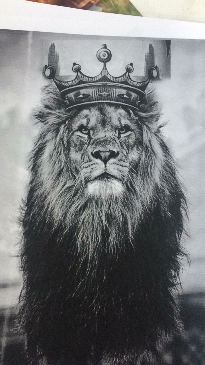 Pin By Mary Lockhart On Ink Pinterest Tattoo Lions Ideas And Designs