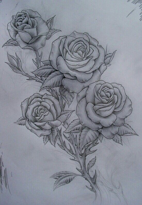 Four Roses Sketch Drawing Designs Tattoos Tattoo Ideas And Designs