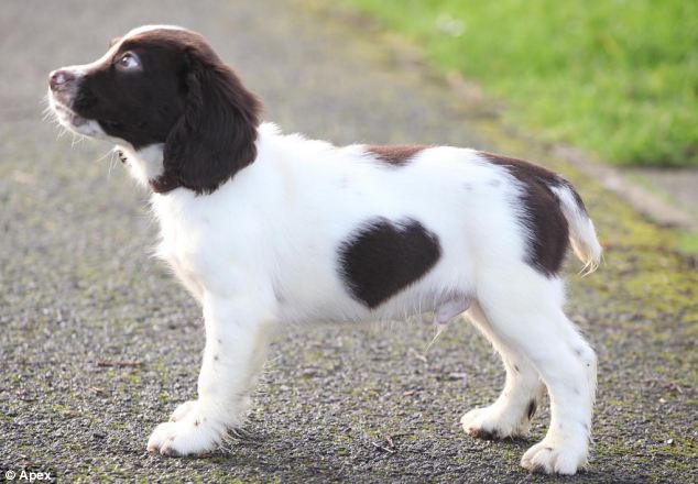 Puppy Has A Heart Shaped Fur Spot Daily Mail Online Ideas And Designs