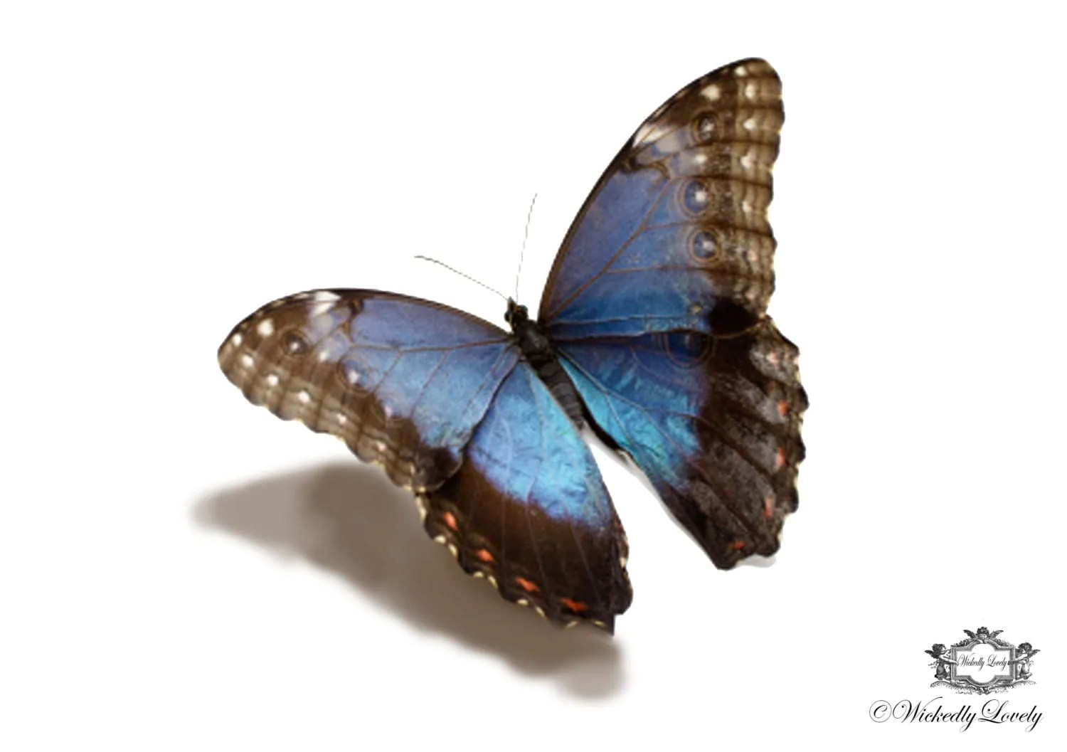 Blue Morpho Butterfly 3D Butterfly Tattoo Wickedlylovely Ideas And Designs