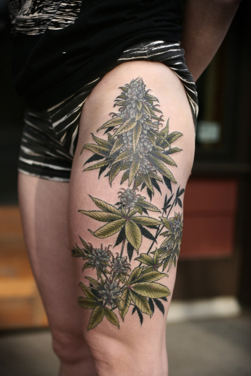The Devils Lettuce Tumblr Ideas And Designs