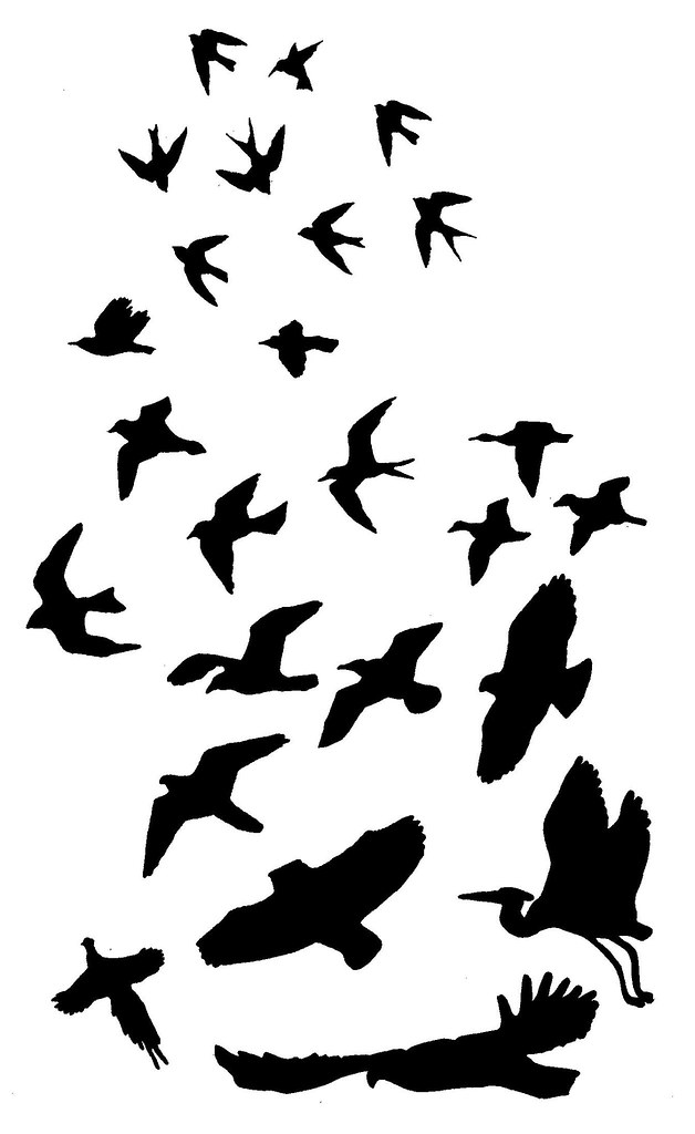 Bird Silhouette Potential Arm Tattoo Draw Color Cut Ideas And Designs