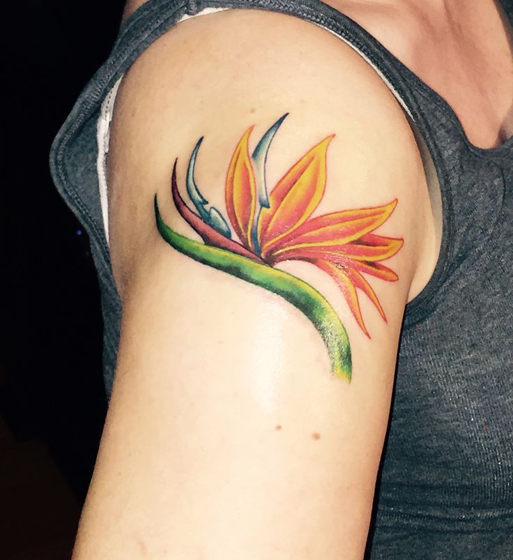 Bird Of Paradise Tattoo Love It Tattoos Pinterest Ideas And Designs