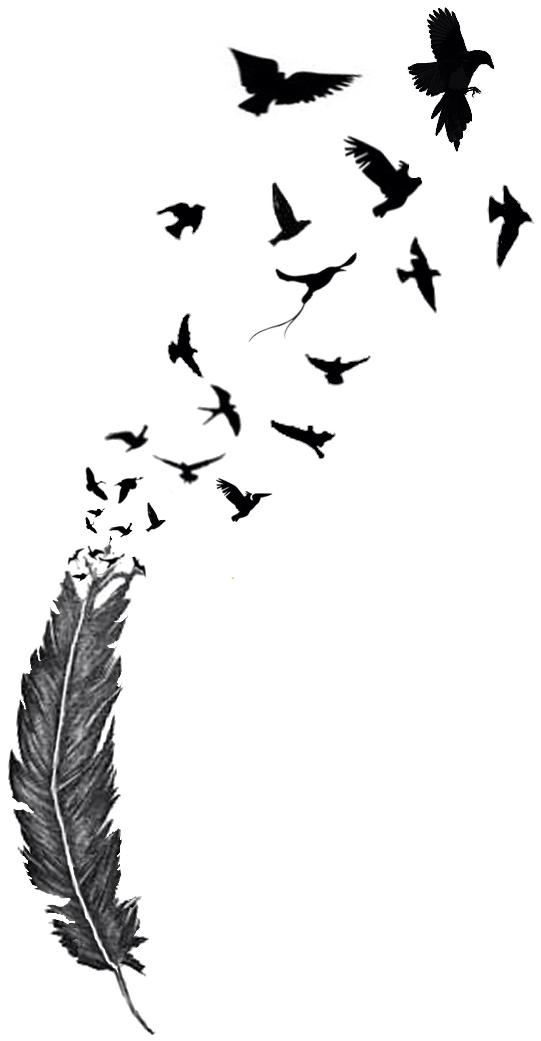 Birds Of A Feather Art Pinterest Feathers Bird And Ideas And Designs