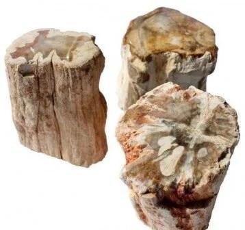Tronc Bois fossilisé