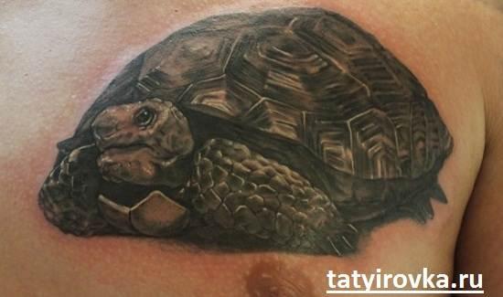 Тату-черепаха-и-их-значение-14