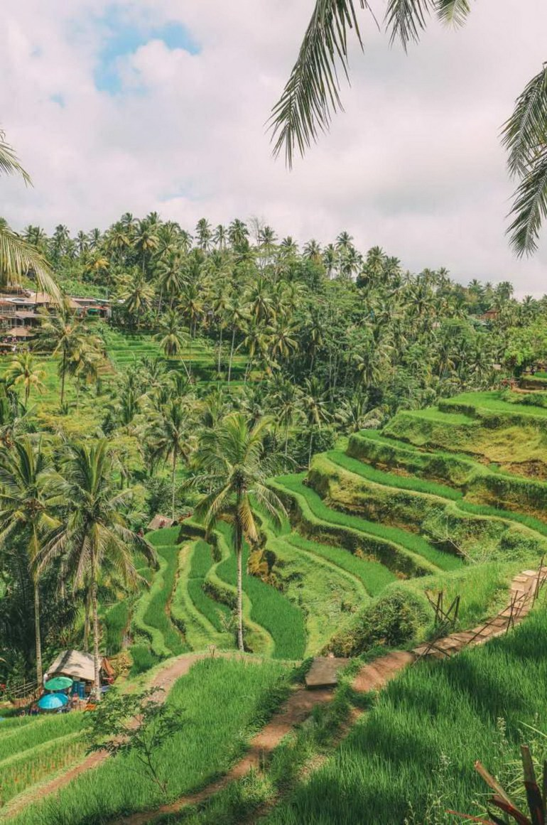 Tegalalang Rice Terrace Ubud Indonesia - Arecales, Hill station, Landscape, Outdoor structure, Plant community, Plantation, Rural area, Terrace, Tree, Vegetation, Woody plant