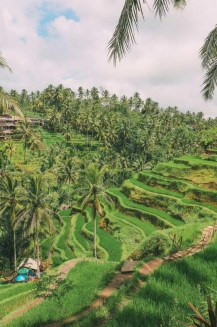 Tegalalang Rice Terrace, Ubud Bali Indonesia - Arecales, Hill station, Landscape, Outdoor structure, Plant community, Plantation, Rural area, Terrace, Tree, Vegetation, Woody plant