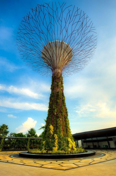 Supertree Grove, Gardens by the Bay Central Singapore - Botany, Environmental art, Woody plant