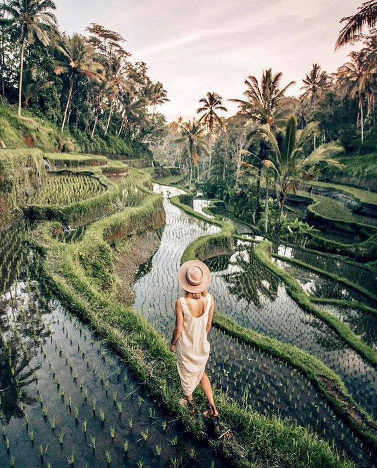 Tegalalang Rice Terrace Ubud Indonesia - Arecales, Botany, Garden, Human, Outdoor structure, People in nature, Person, Plant, Plantation, Rural area, Tree, Woody plant