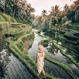 Tegalalang Rice Terrace, Ubud Bali Indonesia - Arecales, Botany, Garden, Human, Outdoor structure, People in nature, Person, Plant, Plantation, Rural area, Tree, Woody plant