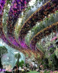 Floral fantasy, Gardens by the Bay Central Singapore - Colorfulness, Garden