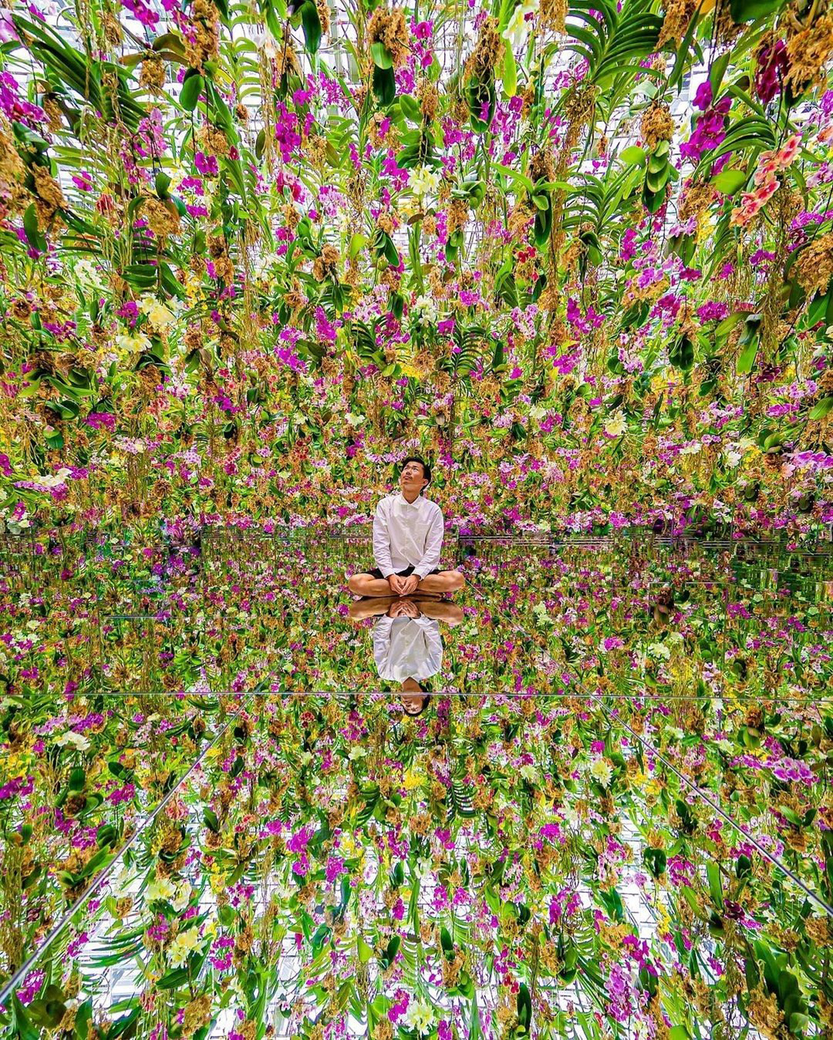 TeamLab Planets, Tokyo  Japan - Flower, People in nature, Person, Plant
