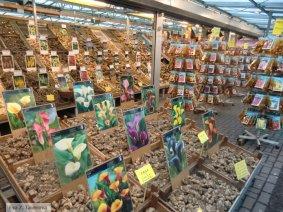 Flower market on Singel