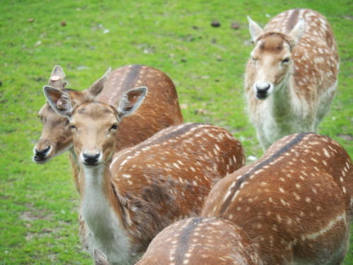 Der Stadtpark beherbergt zahlreiche Tierarten