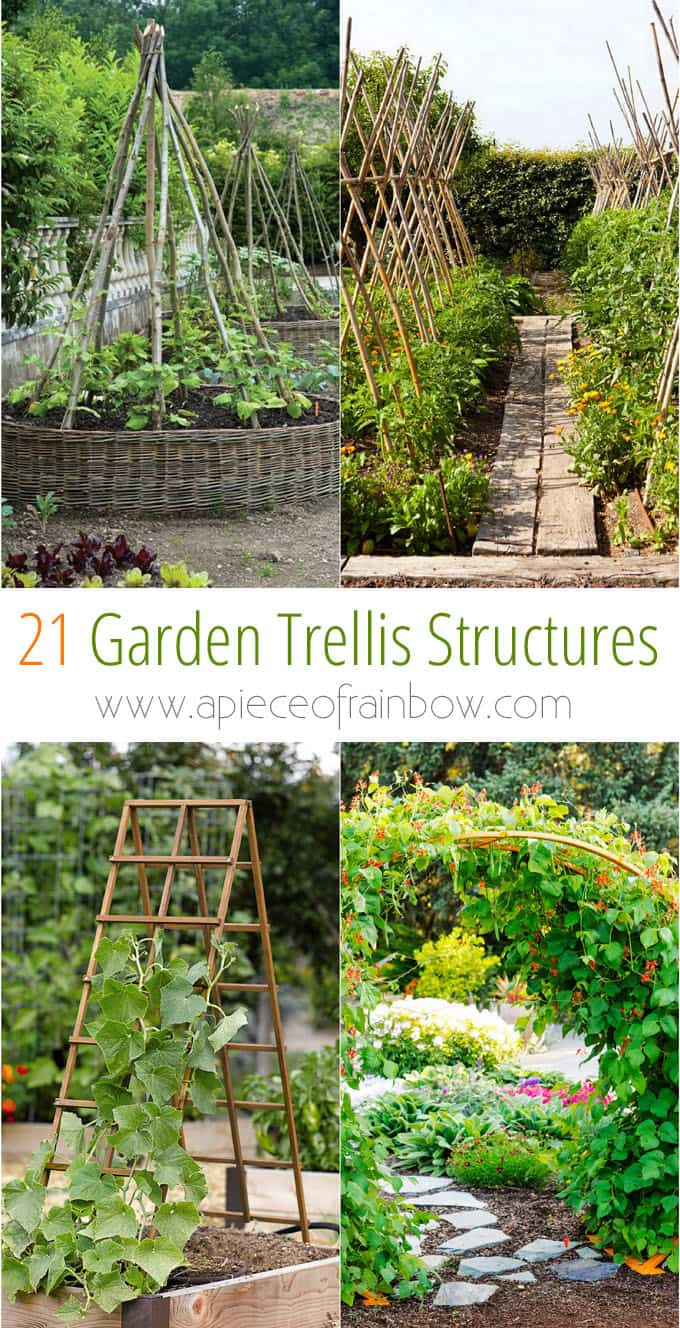 21 Easy Diy Garden Trellis Ideas Vertical Growing Structures A throughout Backyard Trellis Ideas