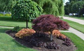 23 Landscaping Ideas With Photos Mikes Backyard Nursery inside 10 Some of the Coolest Concepts of How to Improve Trees For Backyard Landscaping
