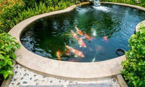 60 Backyard Pond Ideas Photos in Backyard Small Pond Ideas