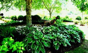 64 Shady Gravel Yard Garden Steps And Plantings Up A Gradual Slope for Shady Backyard Landscaping Ideas