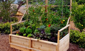Backyard Garden Ideas What To Plant In Your Backyard Garden within Backyard Gardening Ideas With Pictures