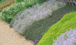 Backyard Ground Cover Ideas Lovely How To Landscape With Backyard pertaining to Backyard Ground Cover Ideas