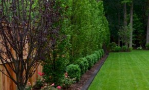Backyard Privacy Fence Landscaping Ideas On A Budget 36 Garden in Backyard Trees Landscaping Ideas