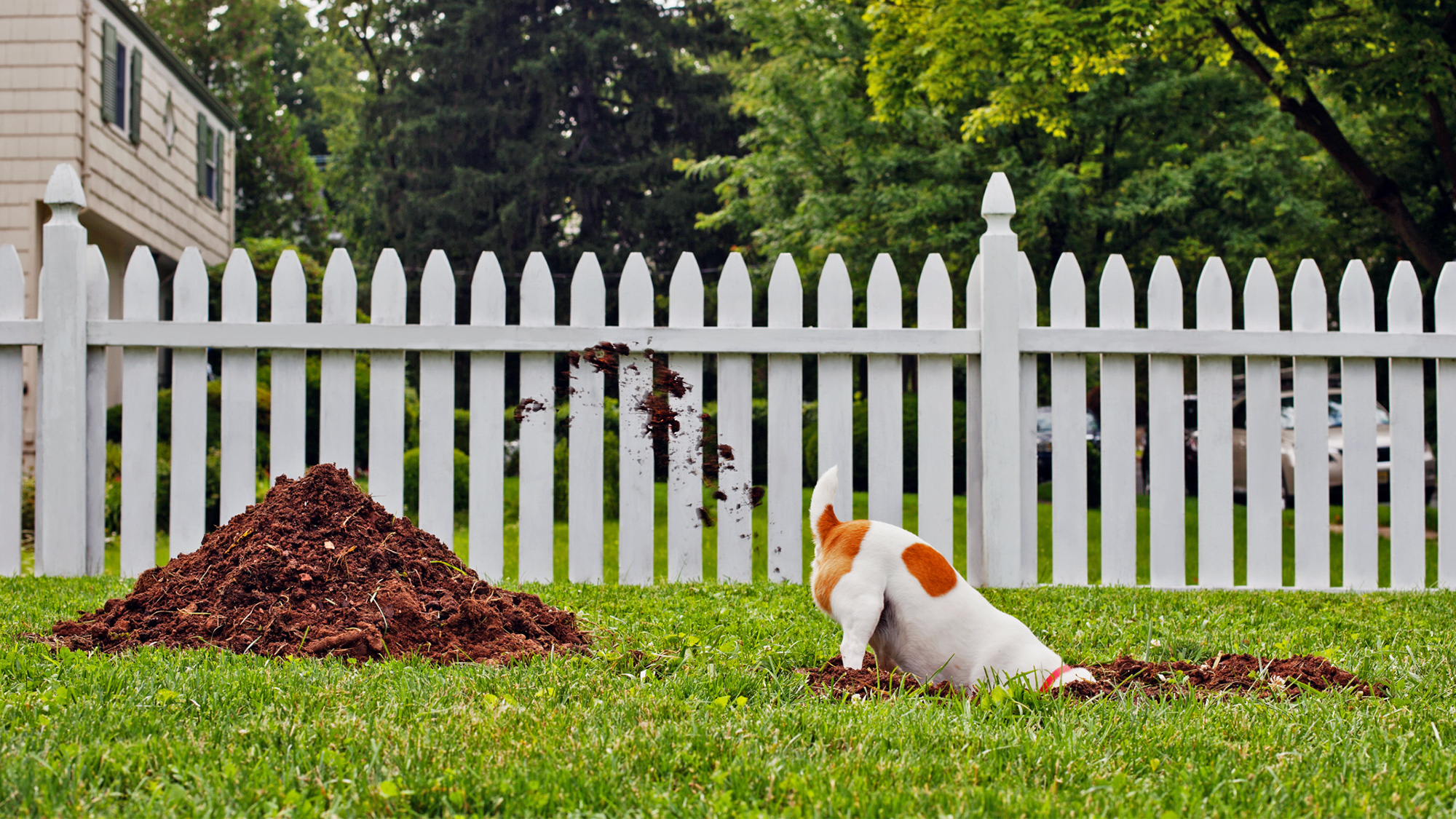 Help My Dogs Are Wrecking My Yard Realtor for Backyard Ideas For Dogs That Dig