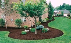 Landscape Design Evergreen Trees Youtube with Trees For Backyard Landscaping