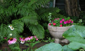 Shade Garden Wikipedia inside 14 Clever Tricks of How to Make Shady Backyard Landscaping Ideas