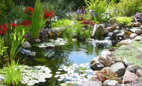 25 Pond Waterfall Designs And Ideas in Backyard Ponds Ideas
