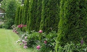 45 Beautiful Backyard Privacy Fence Landscaping Ideas On A Budget inside Backyard Privacy Landscaping Ideas