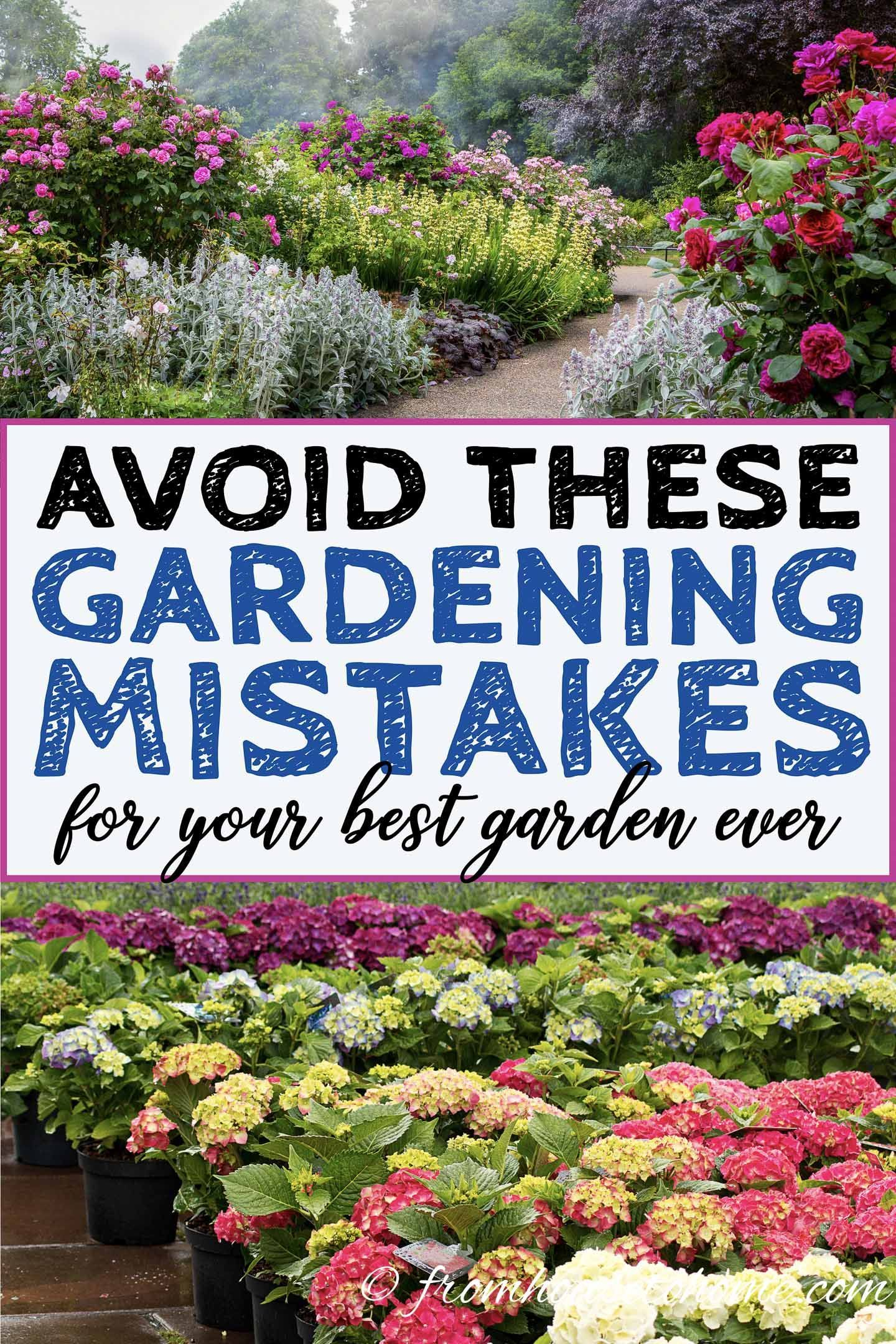 Avoid These 10 Landscaping Mistakes For Your Best Garden Ever inside 15 Clever Designs of How to Upgrade Landscape My Backyard