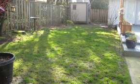 Backyard Ideas For Dogs Backyard Design Ideas For Dogs Backyard Design regarding Backyard Ideas For Dogs