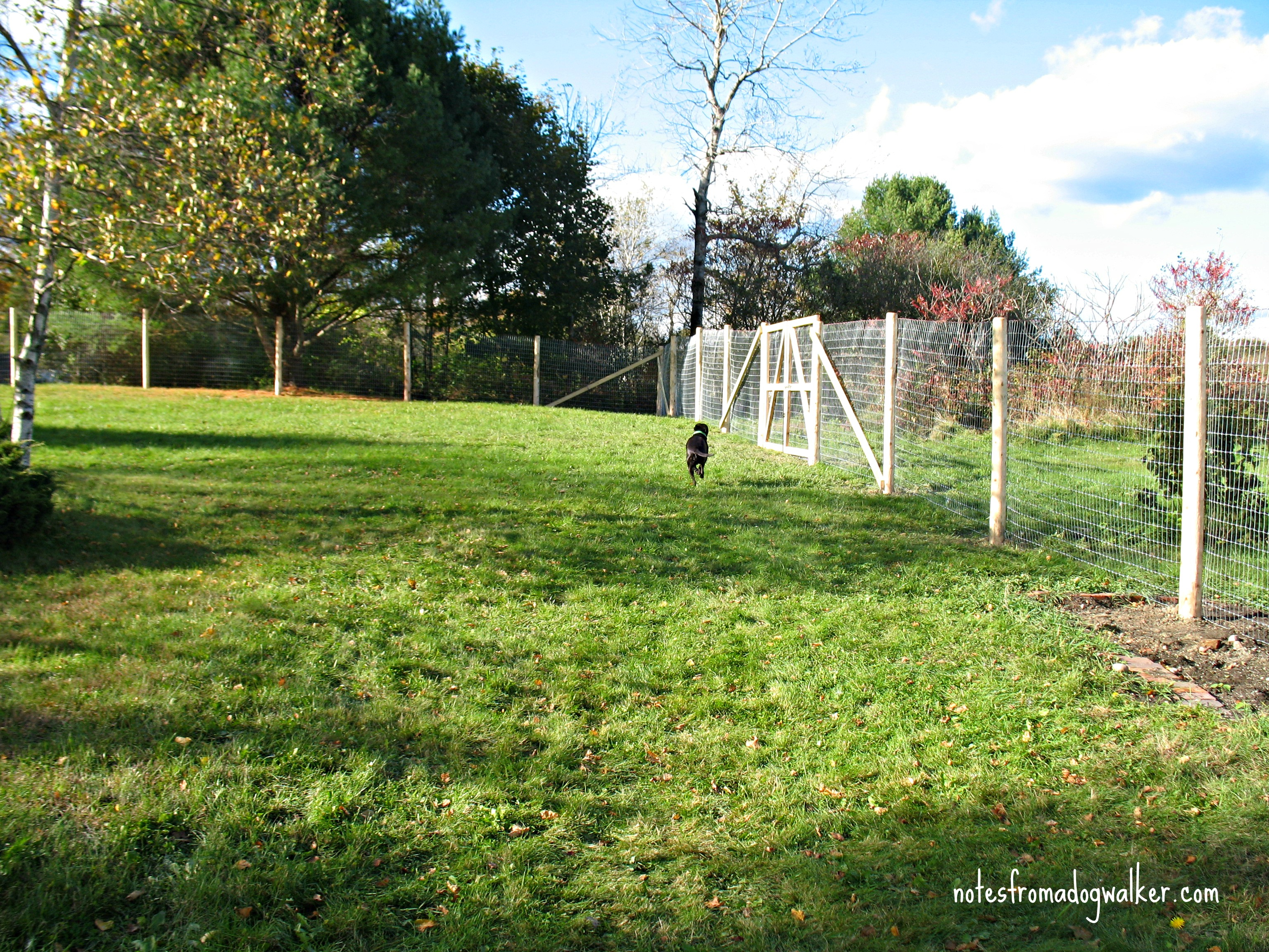 Peace In The Yard 7 Ways To Dog Proof Your Fence Notes From A Dog within Backyard Fencing Ideas For Dogs