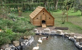 This Is More Realistic On The Look Of Our New Duck Area Ducks within Backyard Duck Pond Ideas