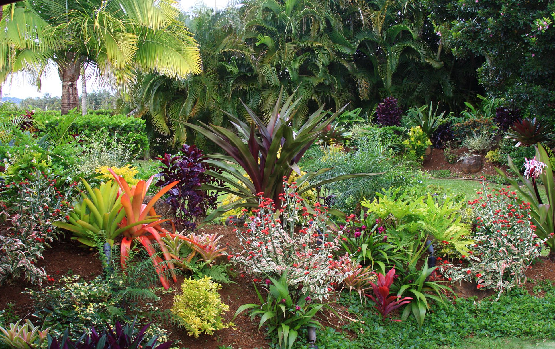 Tropical Flower Garden Design Ideas for Tropical Backyard Landscaping