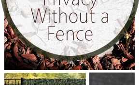 10 Ways To Create Privacy Without A Fence Bees And Roses pertaining to Backyard Privacy Without A Fence