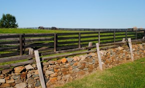 Cheap Fence Ideas For Large Backyard Ducksdailyblog Fence regarding Cheap Backyard Fence