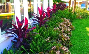 Stunning Way To Add Tropical Colors To Your Outdoor Landscaping intended for Florida Backyard Ideas