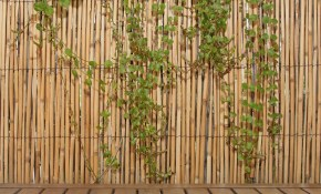 Backyard X Scapes 6 Ft H X 16 Ft L Natural Jumbo Reed Bamboo Fencing pertaining to Backyard XScapes Reed Fencing