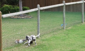 Cheapdogfenceideas Free Issues Of Family Circle Magazine Dog throughout Backyard Dog Fence Ideas