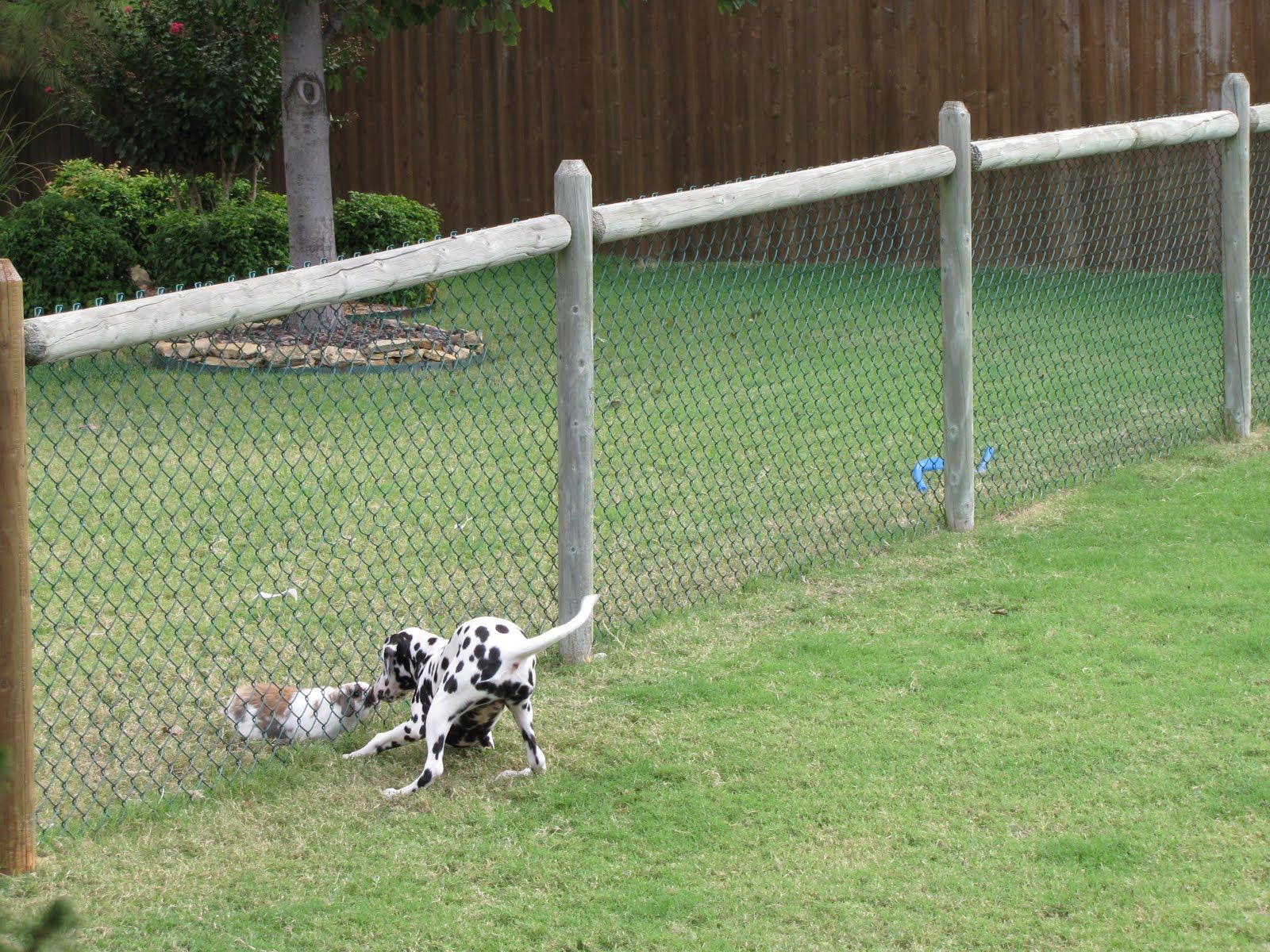 Cheapdogfenceideas Free Issues Of Family Circle Magazine in Backyard Fence For Dogs