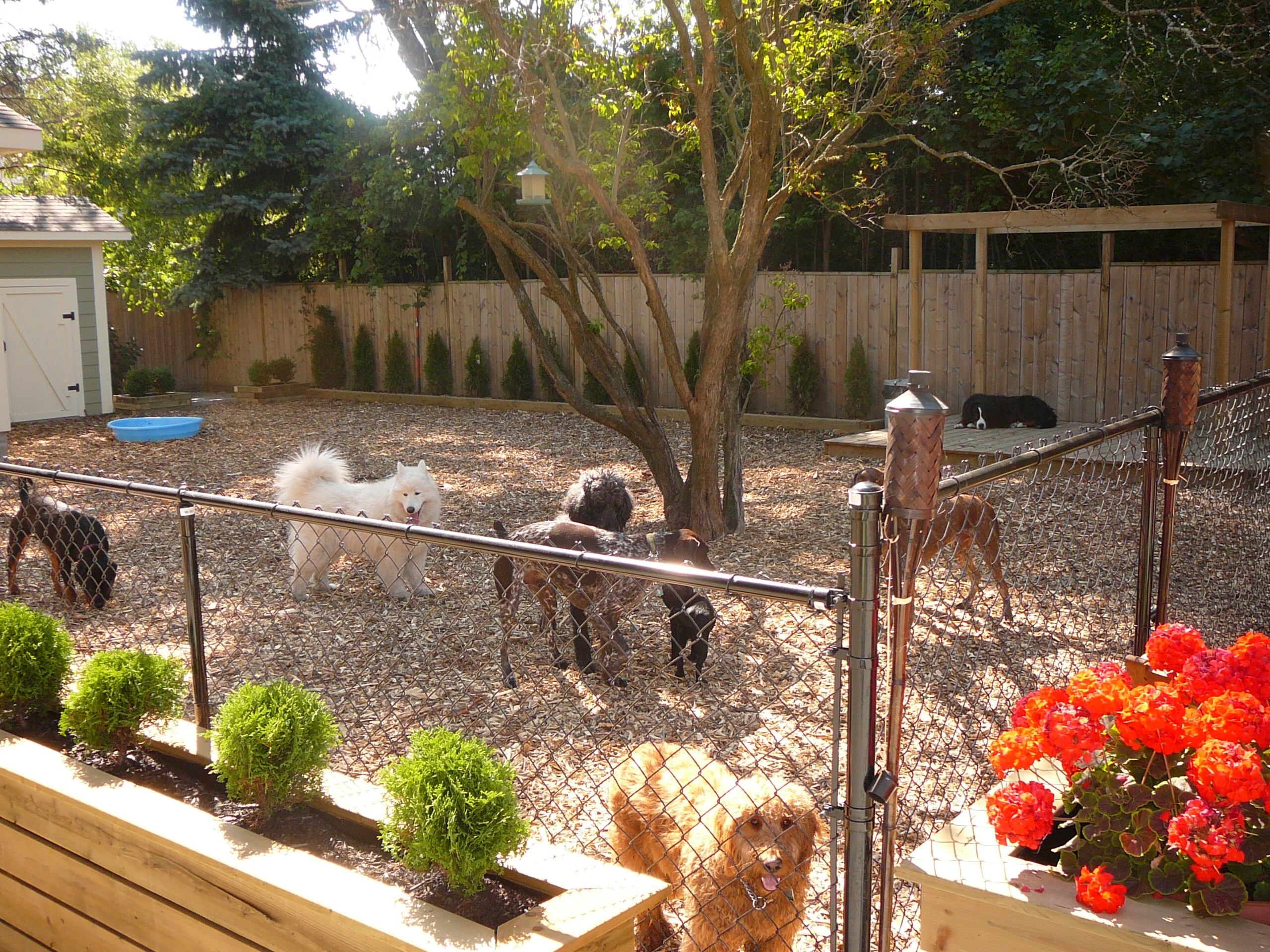 Ideas For Backyard Best Small Backyards With Dogs Deepnot Golimeco with Backyard Landscaping Ideas For Dogs