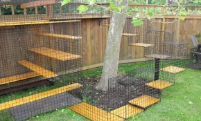 Neat Dog Run Ideas Dogs Backyards Garden Fence Yard Ravishing No with regard to 11 Awesome Ways How to Build Backyard Fences For Dogs