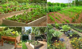50 Fantastic Backyard Vegetable Garden Ideas Bloom And with regard to 10 Some of the Coolest Initiatives of How to Craft Backyard Vegetable Garden Ideas