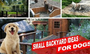 Amazing Small Backyard Ideas For Dogs throughout 10 Smart Initiatives of How to Makeover Backyard Dog Run Ideas